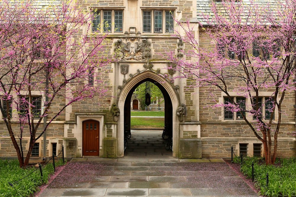 stone university building with old door and archway vestibule with two tress with pink bud flowers on either side